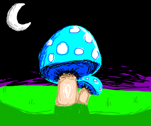 Mystical mushrooms at midnight