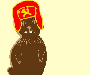 Bear wears winter hat w/ Russian symbol