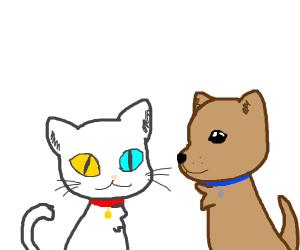 Doggo and a Cat