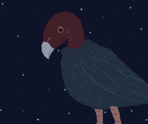 vulture in the night