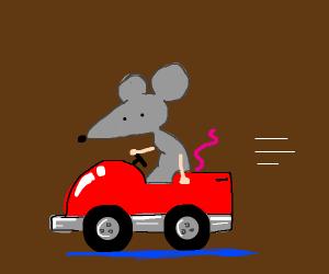 rodent drives a car