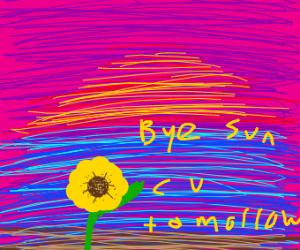 Sunflower watching sunset, calmly wavin'