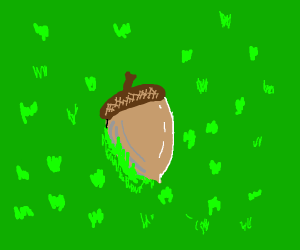Acorn lies peacefully in the grass