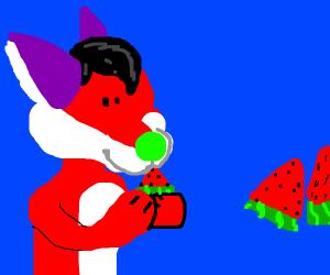 Furry eats a watermelon