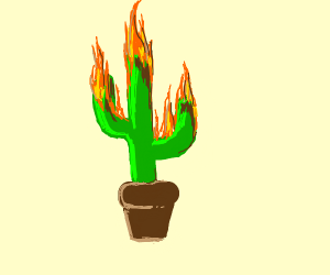 Cactus on Fire