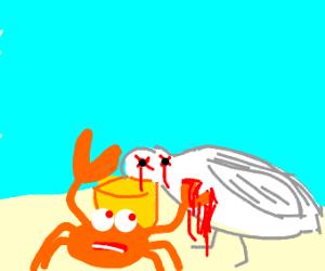 crab killed a pelican