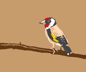 Bird on a bracnh