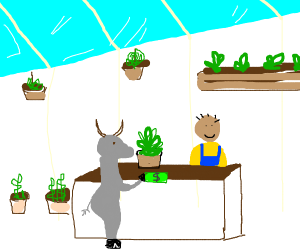 Goat buying a plant