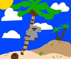 a koala hugging a palm tree
