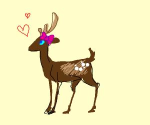 A lovely deer