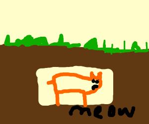Underground Cat