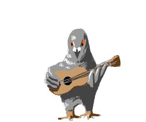 Pigeon musician