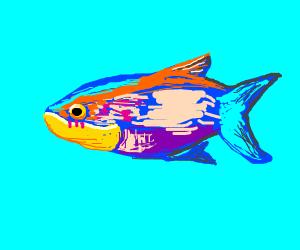 colorful fish blushin
