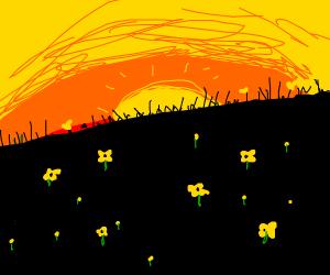 A beautiful diagonal sunset over flower field