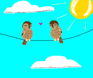 2 birbs sitting together on a wire