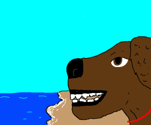 A happy dog at a beach