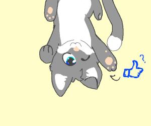 Cute upside down kitten fishing for likes
