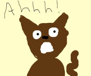 Terrified Cat