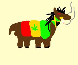 derpy jamaiican horse