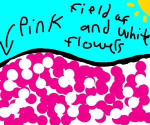 Field of pink and white flowers.