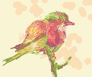 pretty bird on a branch