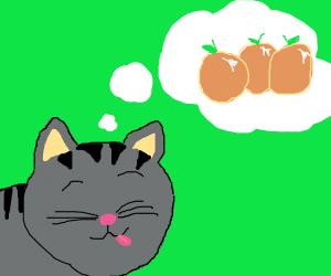 cat dreams of the oranges