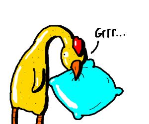 gag chicken biting a pillow