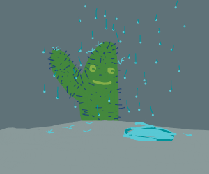 A happy cactus in the rain