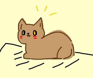 Cute cat loaf