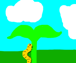 Caterpillar climbing up a P L A N T