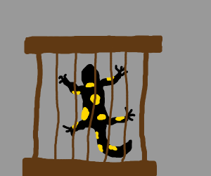 Caged salamander