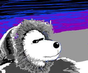 eskimo bear