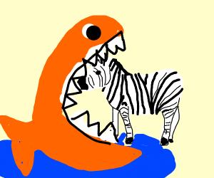 giant fish eats zebra