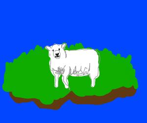 A sheep on an island