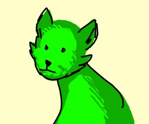 green wolffo