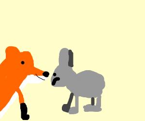 fox starring at rabbit to eat