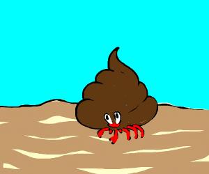 Hermit Crab in Poop Shell