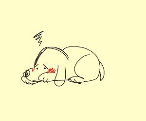 Embarassed cute puppy