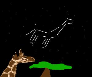 Giraffe stares at sky
