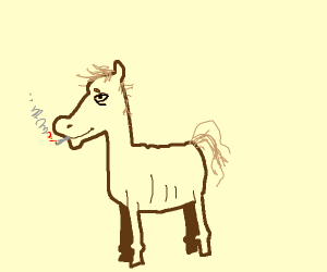 a questionable horse