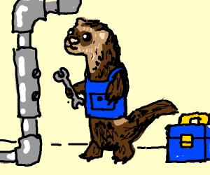 Ferret Plumber