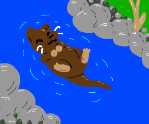 Otter floating on his back down the river (: