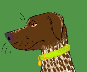 german shorthaired pointer (dog)