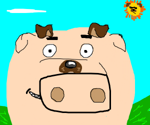 pig taking a selfie