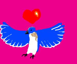 blue birds wing falls in love