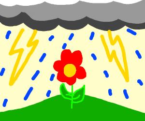 Flower in thunderstorm