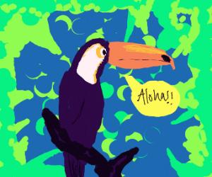 toucan says aloha