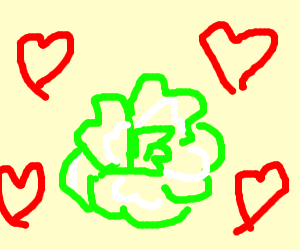 Cabbage love