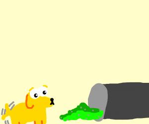 Dog going through trash