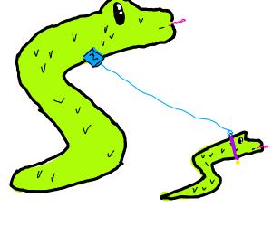 Snake walking a snake